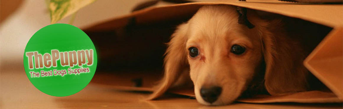 The Puppy | Dog food, costumes and equipment